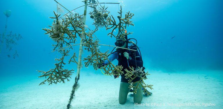 Conoce a los ganadores de nuestras becas de restauración de corales