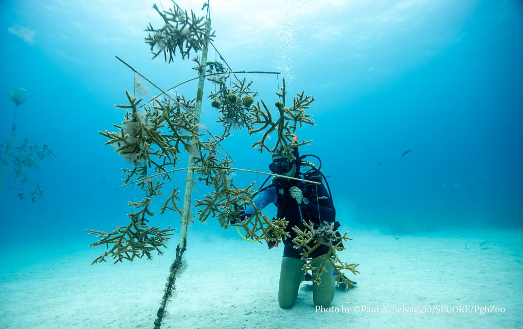 IBEROSTAR SPONSORED REEF FUTURES & ANNOUNCED REEF FUTURES PROJECTS