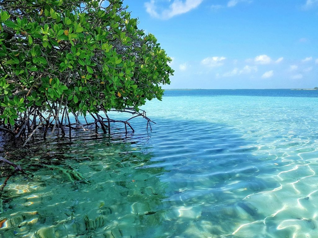 LAUNCHED MANGROVE PROJECT TO IMPROVE ECOSYSTEMS