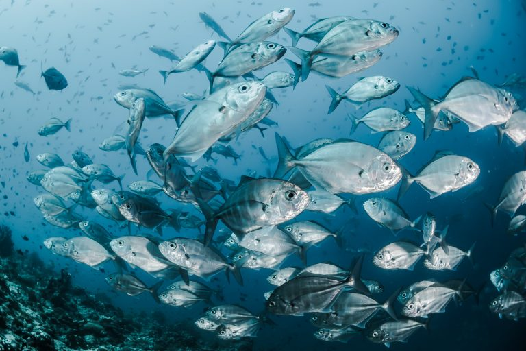 Roadmap to 100% Responsible Seafood by 2025