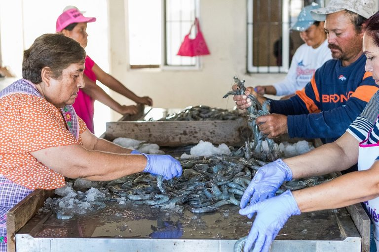 Riding the Wave: Small-scale Local Fisheries