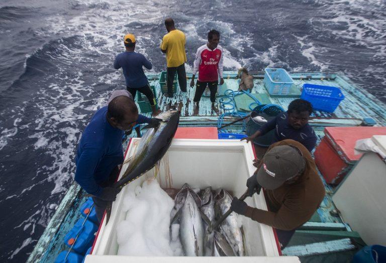 Repercusiones de COVID-19 en la pesca en pequeña escala